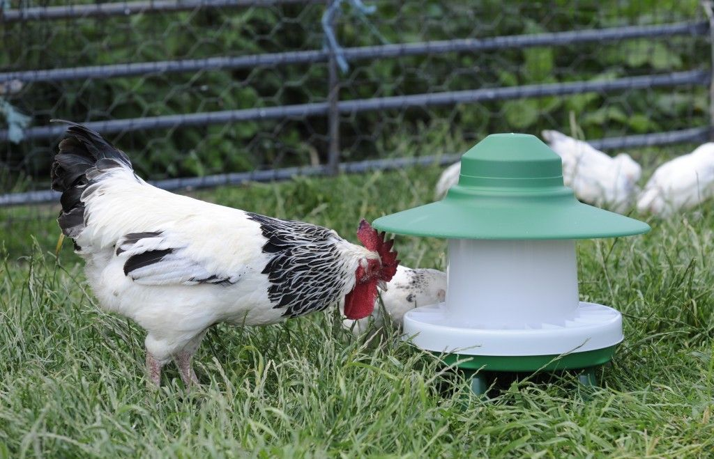 2.5kg Ascot Outdoor Chicken Feeder -   Chicken Feeders Ideas