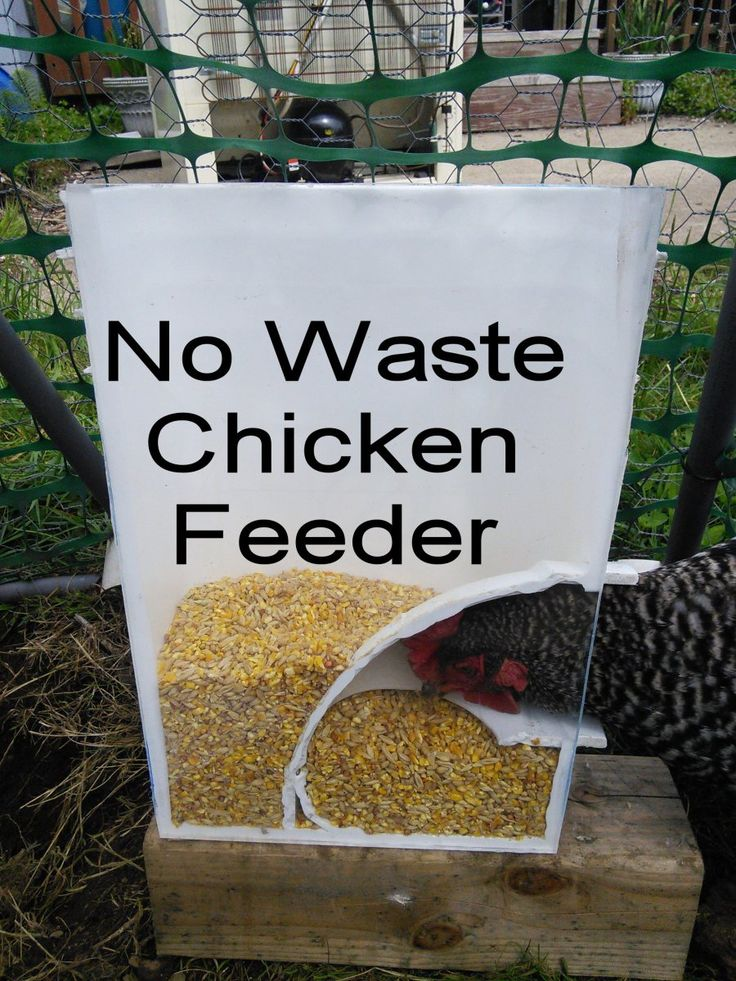 Chicken Feeders Ideas