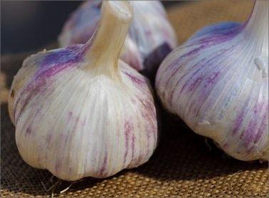 Hardneck Garlic Killarney Red - Cold Hardy w/ Tasty Scapes - 1/2 lb. bag