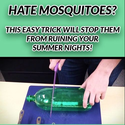 HATE MOSQUITOES THIS EASY TRICK WILL STOP THEM FROM RUINING YOUR SUMMER NIGHTS!
