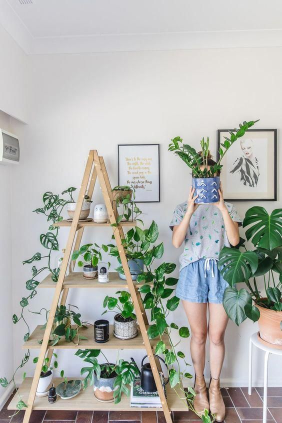 Indoor plant guide - 5 beginner plants you can't kill -   17 plants Stand inspiration ideas