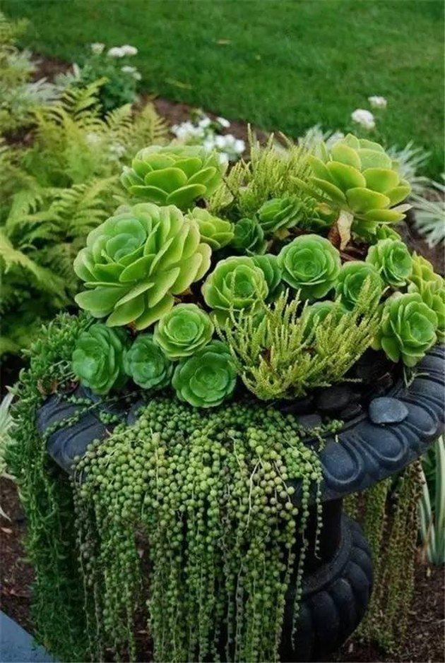 12 Enviable Desert Landscaping Ideas | Hunker -   14 planting succulents in a birdbath ideas
