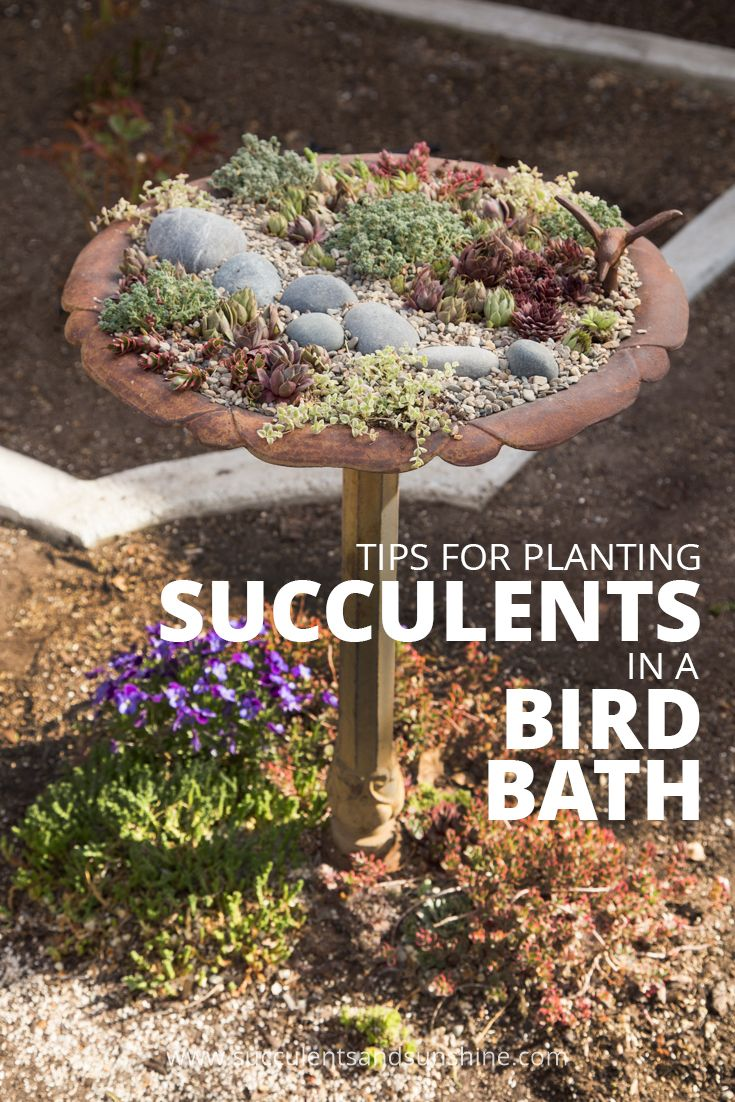 Tips for Planting Succulents in a Bird Bath -   14 planting succulents in a birdbath ideas
