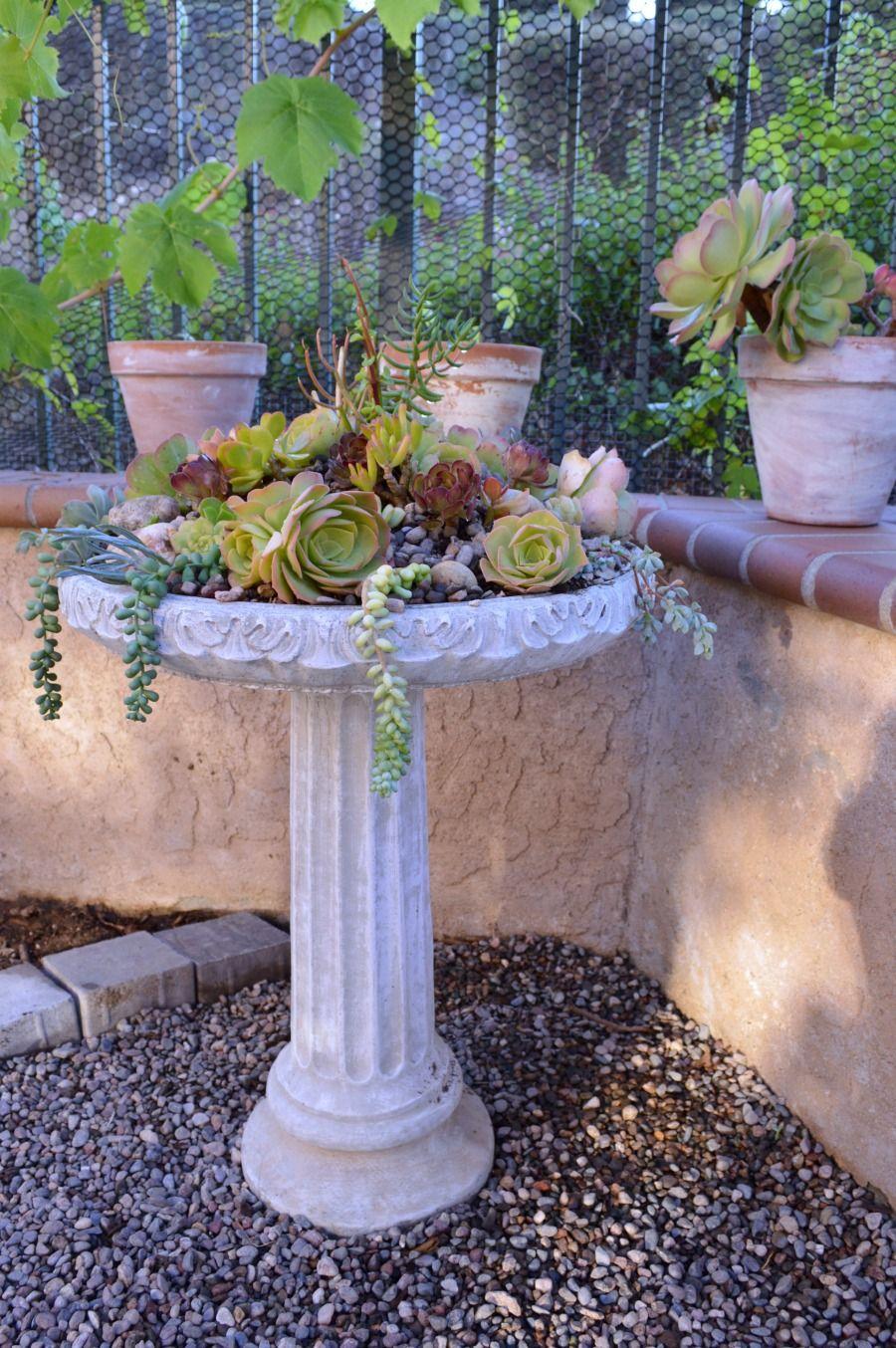 How To Create a Succulent Birdbath Planter - My Uncommon Slice of Suburbia -   14 planting succulents in a birdbath ideas