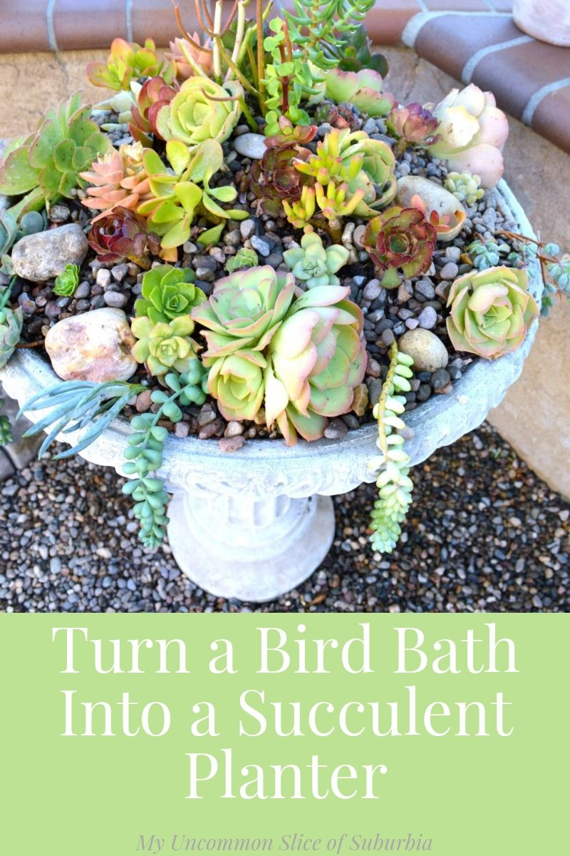 How To Create a Succulent Birdbath Planter -   14 planting succulents in a birdbath ideas
