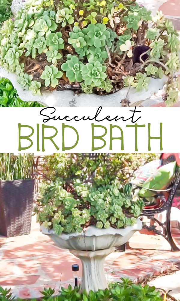 Succulent Bird Bath made with an old birdbath. Learn all the tips and tricks to keep your succulents happy. -   14 planting succulents in a birdbath ideas